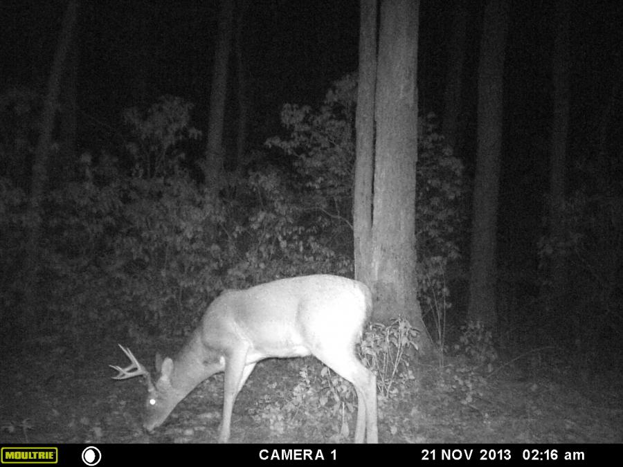 Moultrie A5 Night