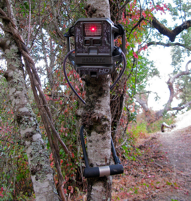Trail camera locations