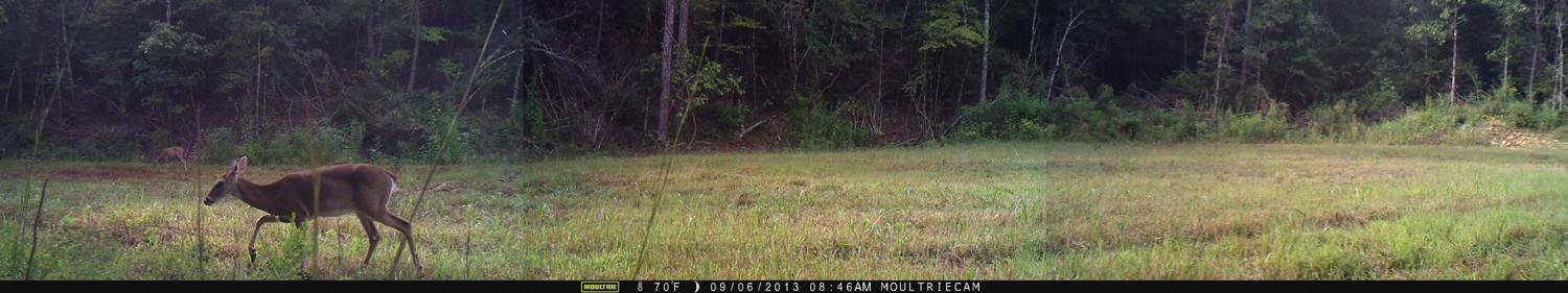 01 Moultrie Panoramic 150