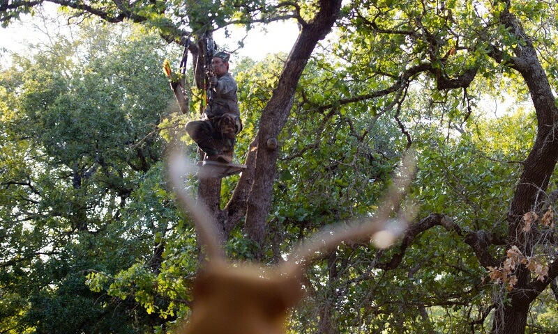 12 Tips For Deer Stand Placement Strategy Setup Advanced Hunter