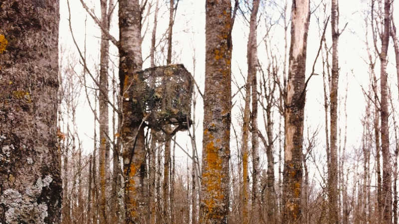 Best Tree Stand Blinds for Concealment